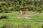 fighting.antelopes.1 by nalina24