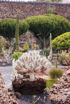 cactus.45