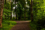 forest.rain.11