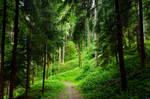 forest.rain.13