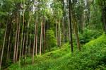 forest.rain.14