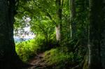 forest.rain.24