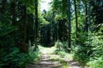 forest.summer.1