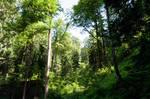 forest.summer.2