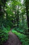 forest.rain.25