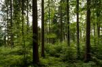 forest.rain.28