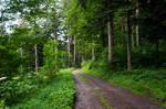 forest.rain.31