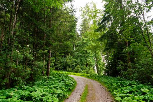 forest.rain.33.1