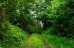 forest.rain.35
