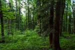 forest.rain.36