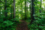 forest.rain.37