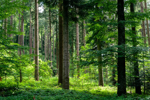 forest.summer.4