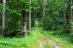 forest.summer.5