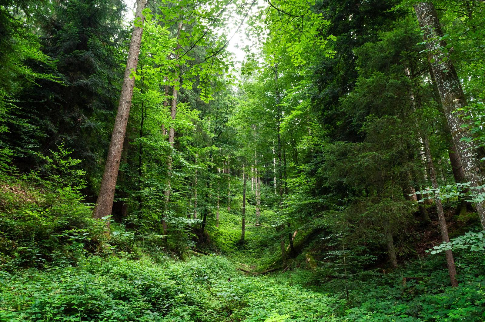 forest.summer.6