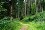 forest.summer.7