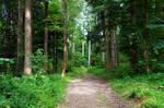forest.summer.8