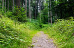 forest.summer.10