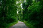 forest.summer.12 overcast