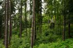 forest.rain.41