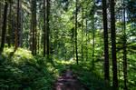 forest.summer.16