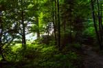 forest.summer.18
