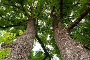 summer.tree.3