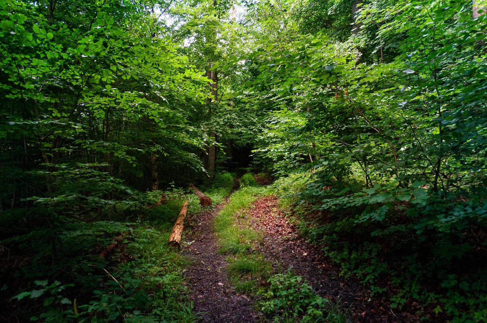 forest.summer.19