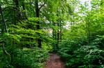 forest.summer.20