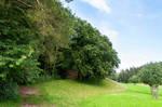 forest.summer.21