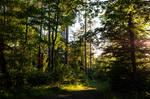 forest.summer.23