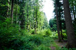 forest.summer.25 by nalina24