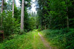 forest.summer.26 by nalina24