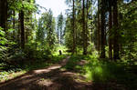 forest.summer.27 by nalina24