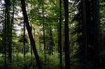 forest.summer.30