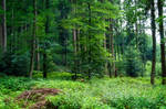 forest.summer.39