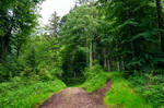 forest.summer.42