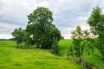 trees along the streamlet