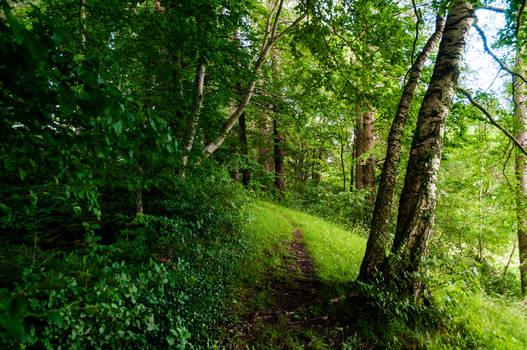 forest.summer.44