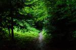forest.rain.42