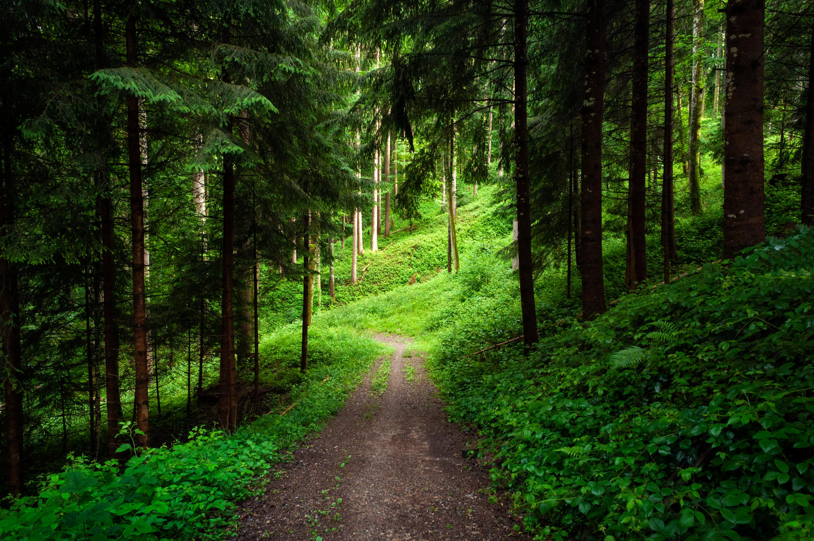 forest.rain.43
