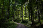 forest.summer.48