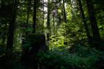 forest.summer.51