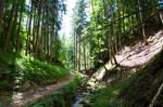 forest.summer.52
