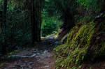 forest.autumn.1