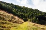 forest.autumn.6