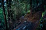 forest.autumn.15