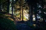 forest.autumn.16
