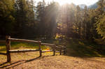 forest.autumn.17