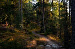 forest.autumn.19