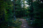 forest.autumn.20